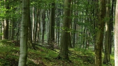 4K Lush Deciduous Summer Forest 2 Stock Footage