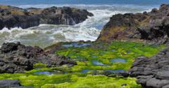Coastal Oregon Shoreline Stock Footage