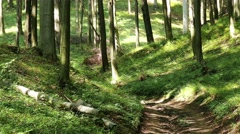4K Lush Deciduous Summer Forest 4 road Stock Footage