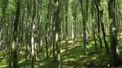 4K Lush Deciduous Summer Forest 5 Stock Footage