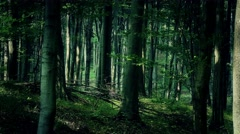 4K Lush Deciduous Summer Forest 10 Stock Footage