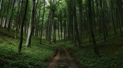 4K Lush Deciduous Summer Forest 16 road Stock Footage