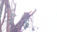 Rainy logger Stock Footage
