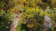 Tropical gardens, flowers, shrubs, trees, cacti Stock Footage