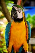 colorful parrot closeup shot on green - stock photo