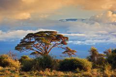 Mount kilimanjaro. savanna in amboseli, kenya Kuvituskuvat