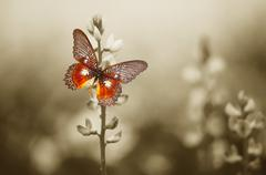 A red butterfly in the moody sepia flowers field. Stock Illustration