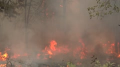 Tree torching with heavy smoke and flames Stock Footage
