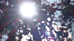 Nature Background Shimmering Sunlight Leaves Stock Footage