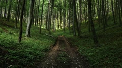 Lush Deciduous Summer Forest 1 road Stock Footage