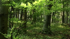Lush Deciduous Summer Forest 3 Stock Footage