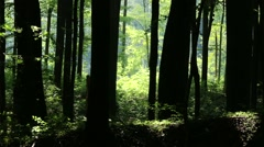 Lush Deciduous Summer Forest 6 silhouette Stock Footage