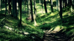 Lush Deciduous Summer Forest 11 road Stock Footage
