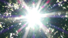 Sunlight Shines through Leaves in Summer Forest 2 Stock Footage