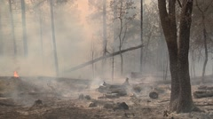 Zoom in on fallen tree in burned out forest with heavy smoke - stock footage