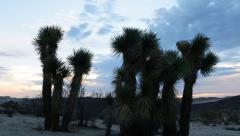 Time Lapse of Joshua Tree during Sunrise -Zoom Out- Stock Footage