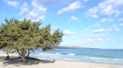 Pine tree by the sea Stock Footage