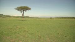 Beautiful View of Safari in Maasai Mara, Kenya Stock Footage