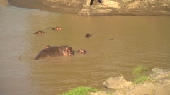 Hippos Wallowing in Mara River, Maasai Mara, Kenya Stock Footage