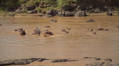 Hippos in Slow Motion in Mara River, Maasai Mara, Kenya Stock Footage