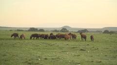 Hyenas in Slow Motion in Maasai Mara, Kenya Stock Footage