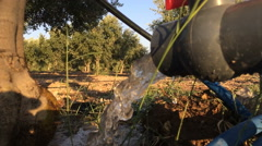 Of drip irrigation and olive plantations (4) - stock footage