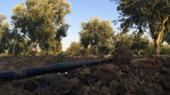 Of drip irrigation and olive plantations (7) Stock Footage