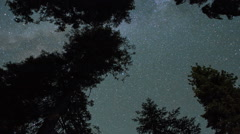 Stars Pass Over Trees Forest - Night to Sunrise Stock Footage