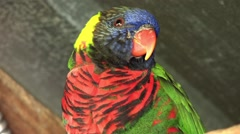 1440 Parrot Close Up Perched on a Branch Stock Footage