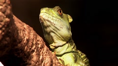 1440 Reptile Sitting on a Log 2 - stock footage