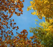 Autumn leaves against blue sky - stock photo