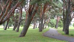 Idyllic Park Road Near The Sea Stock Footage