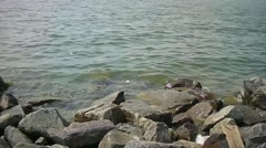 Gurgling water along the coast of the IJssel lake Stock Footage