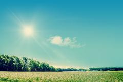 countryside field with sunshine - stock photo