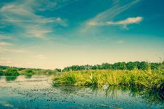 lake scenery with green rushes - stock photo