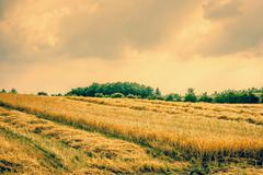 dry agricultural field landscape - stock photo