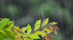 Tropical rain Stock Footage