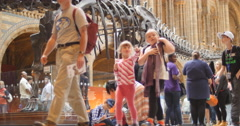 Tourists walk past Diplodocus skeleton 4K Stock Footage