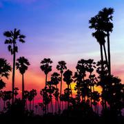 palm trees silhouette on beautiful sunset - stock photo