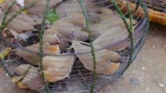 Birds in a cage for sale on the market, myanmar, mandalay Stock Footage