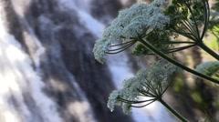 Narada Falls Wild Flowers Stock Footage