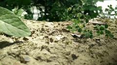 Ants Macro 6 Stock Footage