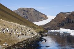adélie penguins (pygoscelis adeliae), devil island, weddell sea, southern oc - stock photo