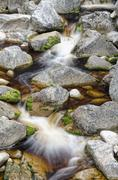 Stream with brown water, coloured by plant tannins, condensed proanthocyanidi Stock Photos