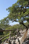 Hiking trail with a railing made of wood, holm oak (quercus ilex), rouwas gor Stock Photos