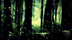 Mysterious Deep Forest Fireflies 2 Stock Footage