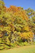 Stock Photo of edge of a field with autumn-coloured deciduous trees near gollenshausen, chie