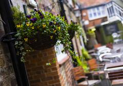 Flowers adorning the outside of a cafe in the county of Wiltshire England - stock photo
