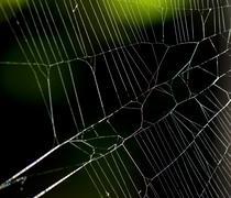 Cobweb of an european garden spider, diadem spider (araneus diadematus), stut Stock Photos
