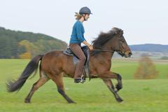 Young horsewoman in autumnal ride on icelandic horse in gallop Stock Photos